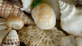 Different mixed colorful seashells as background. Various corals, marine mollusk and scallop shells. Close up lots of different mixed colorful seashells as stock video