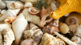 Different mixed colorful seashells as background. Various corals, marine mollusk and scallop shells. Large Yellow Seastar and close up lots of different mixed stock video