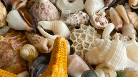 Different mixed colorful seashells as background. Various corals, marine mollusk and scallop shells. Large Yellow Seastar and close up lots of different mixed stock footage
