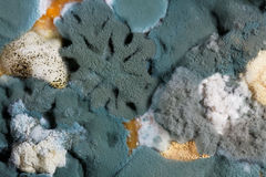 Different mold fungi as background Royalty Free Stock Images
