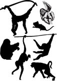 Different monkey silhouettes Stock Image