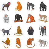 Different monkeys icons set, cartoon style. Different monkeys icons set. Cartoon illustration of 16 different monkeys vector icons for web Stock Illustration