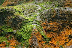 Different moss on rock Stock Photography