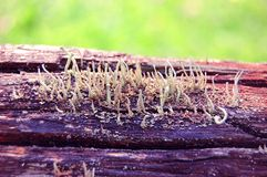 Different moss on the tree Royalty Free Stock Photo