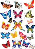Different multicolored butterflies Royalty Free Stock Image