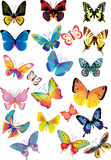 Different multicolored butterflies -  Stock Images