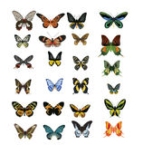 Different multicolored butterflies - vector Stock Photo