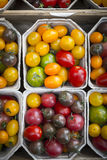 Different multicolored varieties of tomatoes Royalty Free Stock Photo