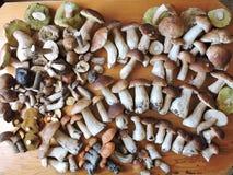 Different mushroom Royalty Free Stock Photos