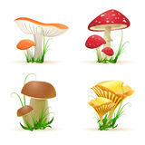 Different Mushroom Trees Stock Photo