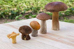 Different mushrooms are in ascending order (cep, brown cap boletus, orange-cap boletus, paxil, chanterelle) Stock Images