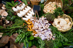 Different mushrooms, herbs and spices Royalty Free Stock Photo