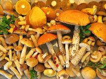 Different mushrooms Stock Images