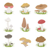 Different Mushrooms Realistic Drawings Set Royalty Free Stock Photo