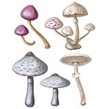 Different mushrooms on white Royalty Free Stock Image