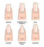 Different nail shapes - Fingernails fashion Trends. Vector illustration of the Different nail shapes - Fingernails fashion Trends Stock Images