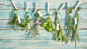 Different named fresh herbs hanging on a line stock images
