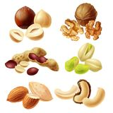 Different nuts realistic vector set. Set of different peeled and with peel nuts realistic vector illustrations isolated on white background. Full and cracked Stock Image
