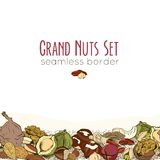 Different nuts seamless border. Colored vector illustration Royalty Free Stock Photography