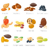 Different nuts vector set. Royalty Free Stock Images