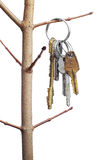 Different keys on a tree branch Royalty Free Stock Image