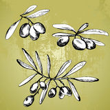 Different olive branches. Different hand drawn olive branches royalty free illustration