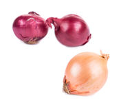 Different onions. Royalty Free Stock Image