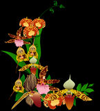 Different orchid flowers bouquet on black Royalty Free Stock Image