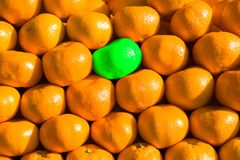 Different from others. GMO is a photo of oranges and one of them is green in a way to demonstrate human influence on nature Royalty Free Stock Photos