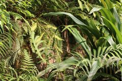 Different palms in leipzig in zoo in germany. royalty free stock photo