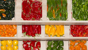 Different paprika's. Red green yellow en orange paprika Royalty Free Stock Photo
