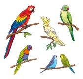 Different parrots - vector illustration Stock Photo