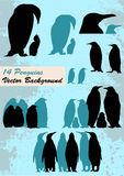 Different Penguins Royalty Free Stock Photography