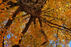 Fall Colors. Different perseptive fall tree folliage royalty free stock photography