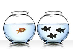 Different perspective view. From separate gold fish Stock Images
