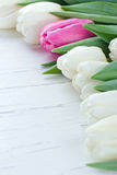 Different pink tulip among white tulips Royalty Free Stock Image
