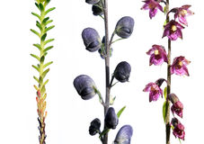 Free Different Plants Against White Background Royalty Free Stock Photos - 8031238