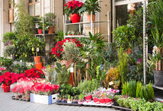 Different plants in yard of flower shop stock photo
