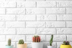 Different potted cacti near brick wall, space for text. Interior decor stock images
