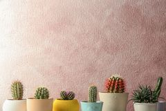 Different potted cacti near color wall, space for tex. T. Interior decor royalty free stock photo