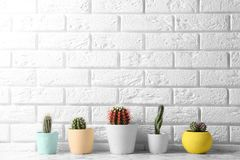 Different potted cacti on table near brick wall, space for text. Interior decor royalty free stock photography