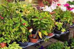Different potted plants and seedlings near the florist shop entrance Royalty Free Stock Image