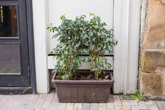 Different potted plants and seedlings near the florist shop entrance Royalty Free Stock Images