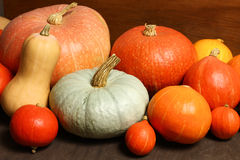 Different pumpkins Stock Photography