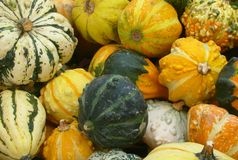 Different Pumpkins. This is an arrangement of several multicolored squashes Royalty Free Stock Photos