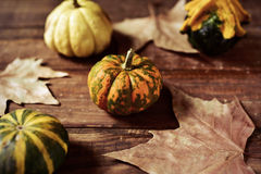 Different pumpkins Royalty Free Stock Photo