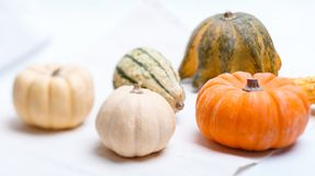 Different pumpkins Royalty Free Stock Image
