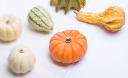 Different pumpkins Royalty Free Stock Images