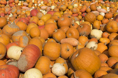 Different Pumpkins Stock Images