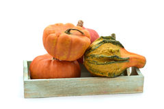 Different pumpkins in a tray Stock Photo